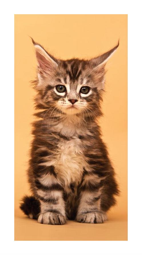 Dětská osuška Jerry Fabrics Kočka