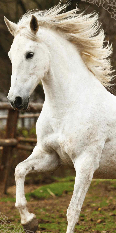 Dětská osuška Jerry Fabrics White horse