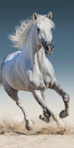Osuška Bílý kůň 03