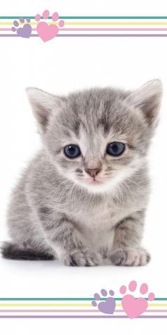 Osuška Koťátko color 70x140 cm